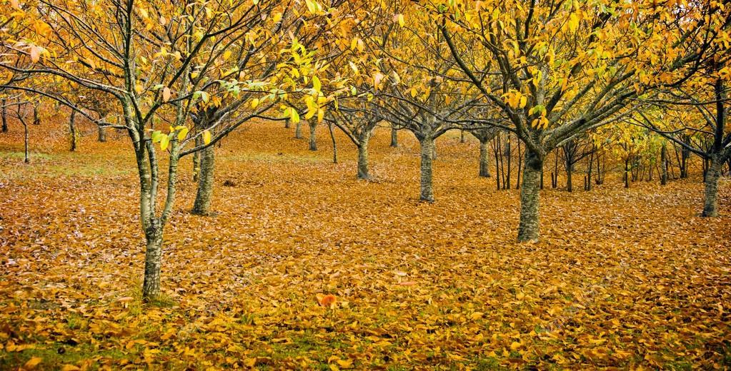 Коли у сад приходить осінь… 5cbef1243db46