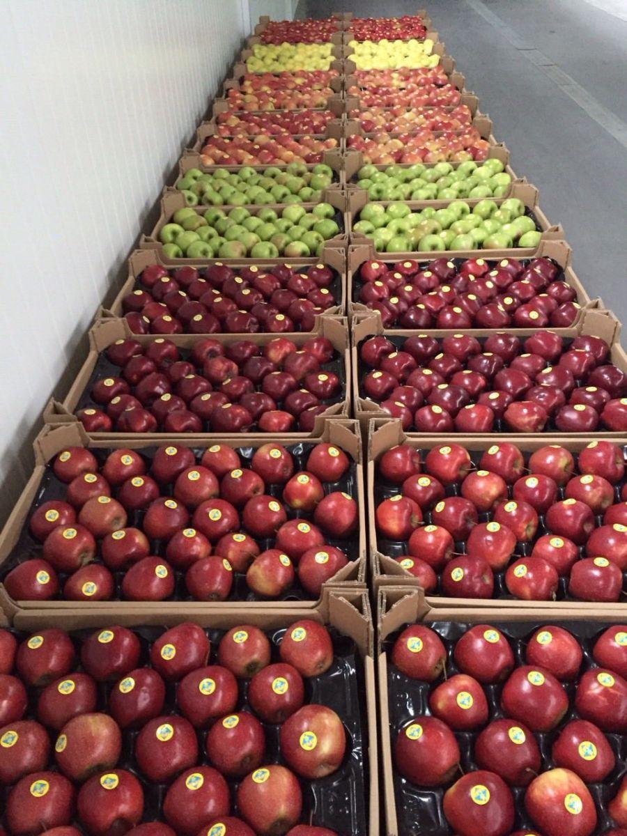 Яблука із Тернопілля - на дитяче харчування ! 59589aea05097